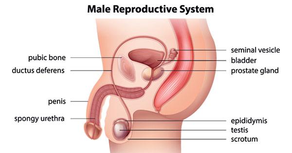erezione debole o assente in un uomo